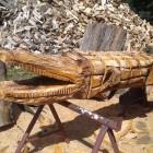 Krokodil ca 300 cm bespielbar