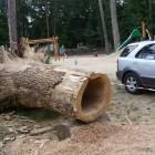 Krabbelröhre, ausgehölter Baum, Beelitz Fichtenwalde Barfusspfad