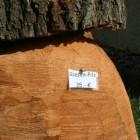 Pilz sitzhöhe 45 cm, Skulptur, Kettensäge, Berlin , Brandenburg, geschnitzt, Handmade, Holz