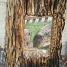 Spiegel im Baum gefangen