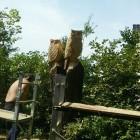 Standjob, stehende Baumstämme zu Eulen verwandelt , Skulptur, Kettensäge, Berlin , Brandenburg, geschnitzt, Handmade, Holz